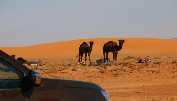 Nissan Navara Maroko069