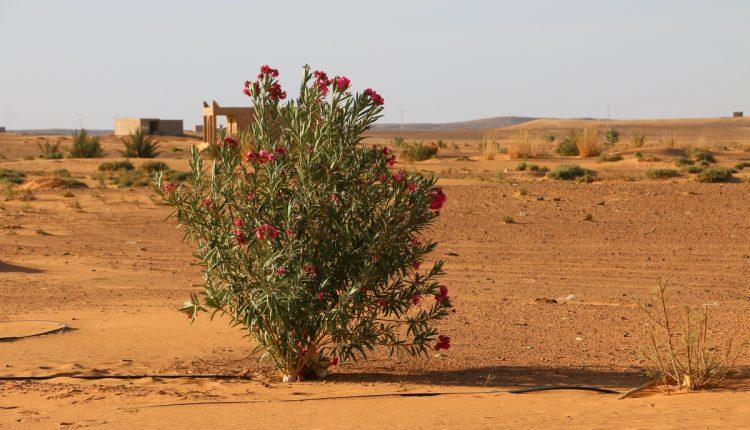 Nissan Navara Maroko113
